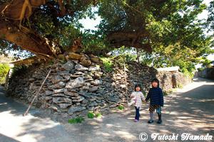 珊瑚の石垣塀が今も息づく与路島