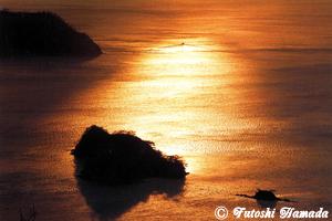 黄金色に染まる大島海峡